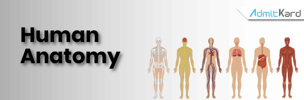 human anatomy-01